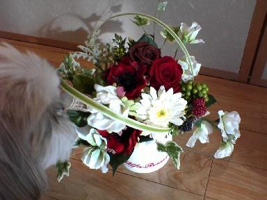 flowerchevy